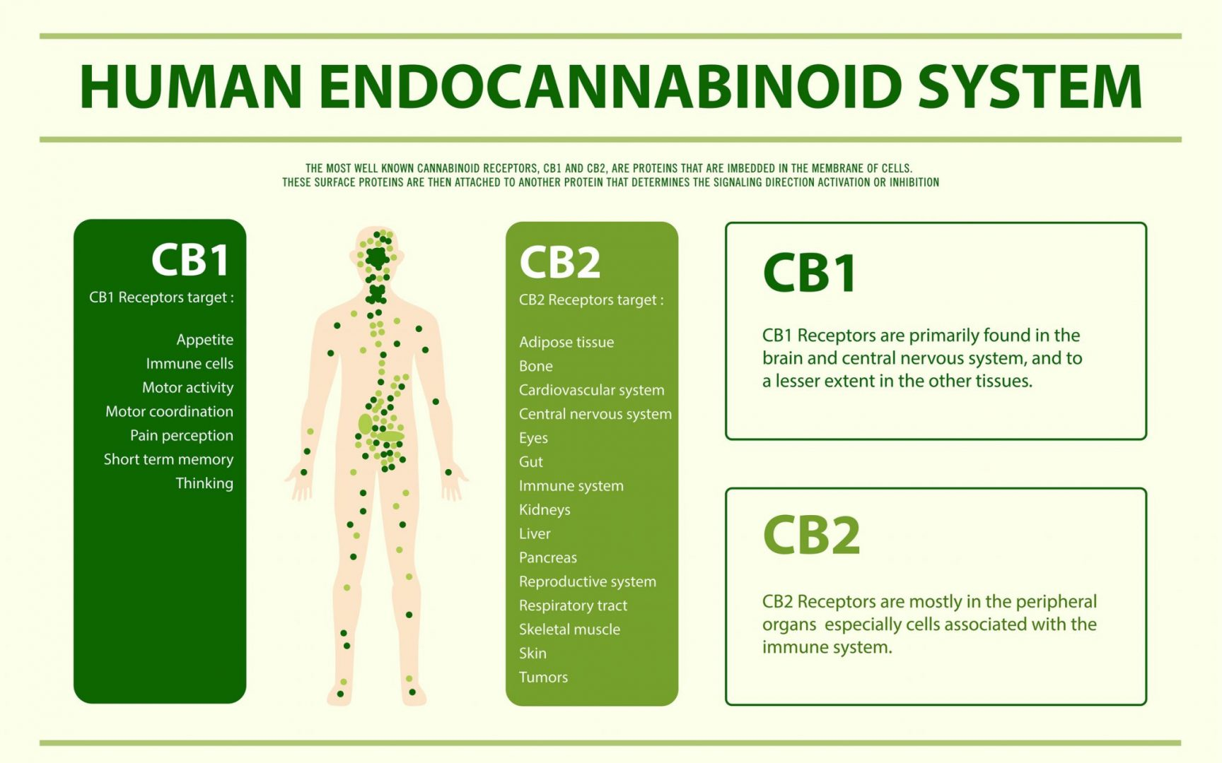 What Is The Endocanabinoid System?