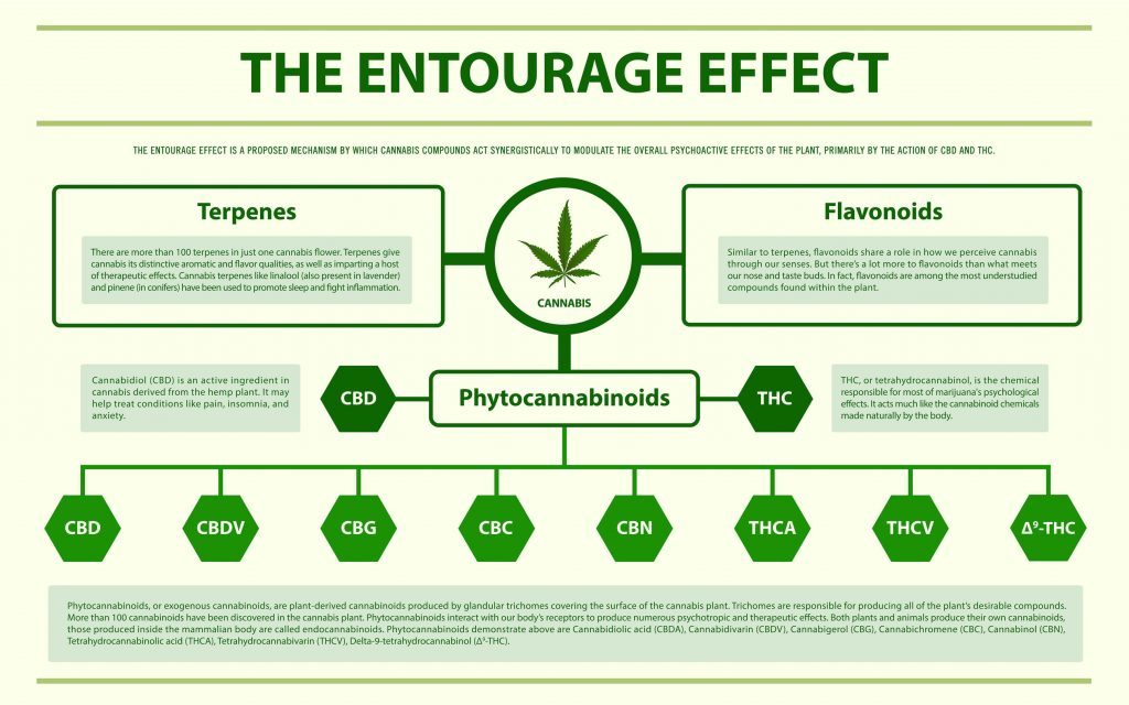 The Entourage Effect Explained!