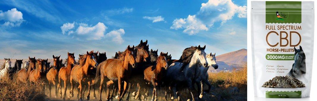 Premium CBD Horse Pellets