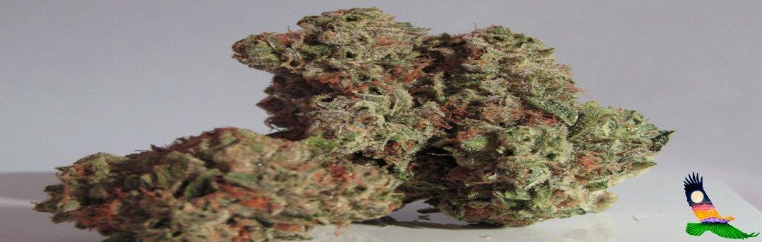 cbd flower for sale online