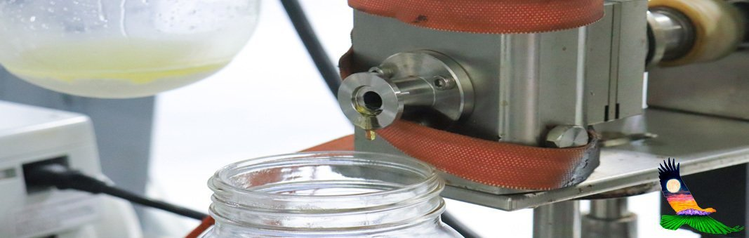CBD Distillate Being Extracted
